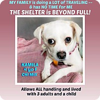 Adopt A Pet :: Kamila - Wantagh, NY
