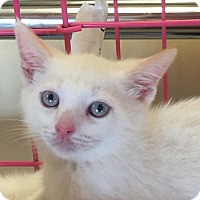 Adopt A Pet :: Miles - Atlanta, GA