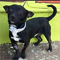 Adopt A Pet :: Pepsi - Phoenix, AZ