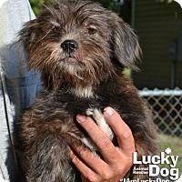 Adopt A Pet :: Vance - Washington, DC