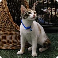 Adopt A Pet :: Smores - Morgan Hill, CA