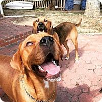 Adopt A Pet :: Charlie - Burlington, NJ