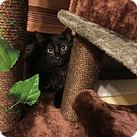 Adopt A Pet :: Onyx - Davie, FL