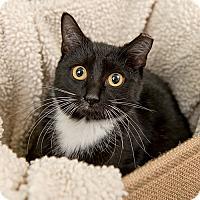 Adopt A Pet :: Martie - Wilmington, DE