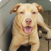 Adopt A Pet :: Petra - Suwanee, GA