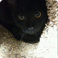 Adopt A Pet :: Thumbelina - Hallandale, FL