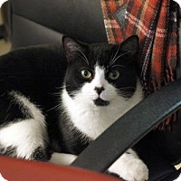 Adopt A Pet :: Eric - Toronto, ON