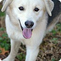 Adopt A Pet :: Jasper - Patterson, NY