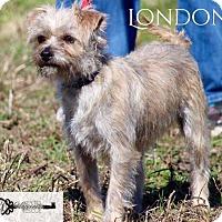 Adopt A Pet :: London - DeForest, WI