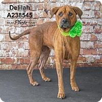 Adopt A Pet :: DELILAH - Conroe, TX