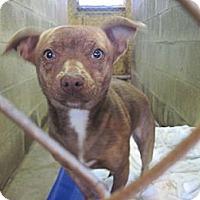 Adopt A Pet :: Skinner - Linden, TN
