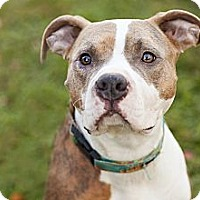 Adopt A Pet :: Willow - Reisterstown, MD