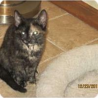 Adopt A Pet :: Jessie - Sterling Hgts, MI