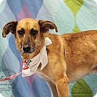 Adopt A Pet :: Dumus - McKinney, TX