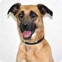 Adopt A Pet :: Echo - Port Washington, NY