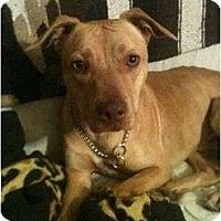 Adopt A Pet :: Monty - Arlington, TX