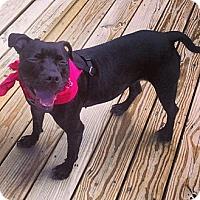 Adopt A Pet :: Cleo - New York, NY