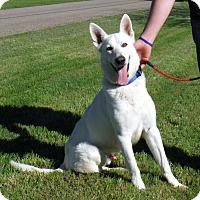 Adopt A Pet :: APOLLO - SAN ANTONIO, TX
