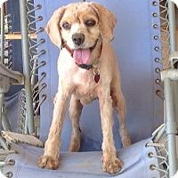 Adopt A Pet :: Elke - Santa Barbara, CA