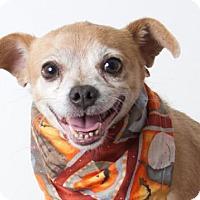Adopt A Pet :: *SCAMP - Sacramento, CA
