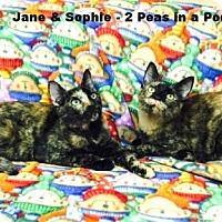 Adopt A Pet :: JANIE - Cypress, CA