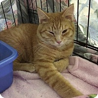 Adopt A Pet :: Copper - Byron Center, MI