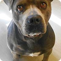 Adopt A Pet :: Trudy - Redding, CA