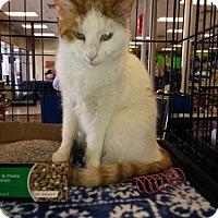 Adopt A Pet :: Betty - Avon, OH