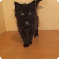 Adopt A Pet :: Einstein - Woodward, OK