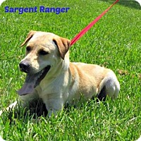 Labrador Retriever Mix Dog for adoption in Lake Jackson, Texas - Sargent Ranger~In Foster