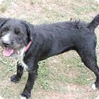 Adopt A Pet :: Scottie - Cottonport, LA