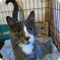 Adopt A Pet :: Grimmy - Geneseo, IL