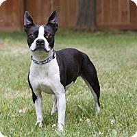 Adopt A Pet :: PURL - Ile-Perrot, QC