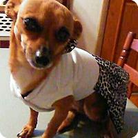 Adopt A Pet :: Gia - Andalusia, PA