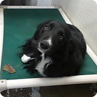 Adopt A Pet :: Jet - Geneseo, IL