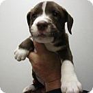 Adopt A Pet :: Baby Peanut Butter