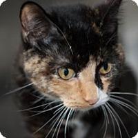 Adopt A Pet :: Callie - Martinsville, IN