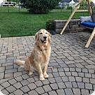 Adopt A Pet :: Miller