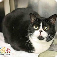Adopt A Pet :: MISS KITTY - Irvine, CA