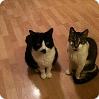 Adopt A Pet :: Charlie and Travis - Staten Island, NY