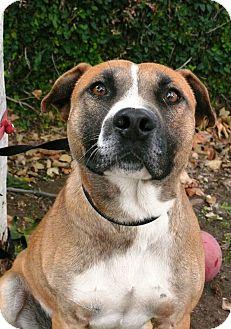 Marty | Adopted Dog | A140338 | Chula Vista, CA | German ...