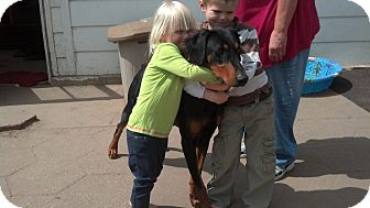 Doberman Pinscher Dog for adoption in Wichita, Kansas - Diago