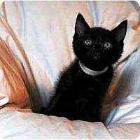 Adopt A Pet :: MacGuyver - Irvine, CA