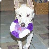 Adopt A Pet :: HwanHei - Southern California, CA