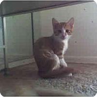 Adopt A Pet :: Camille - Scottsdale, AZ