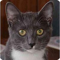 Adopt A Pet :: Ringo - Montgomery, IL