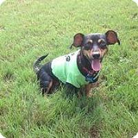 Adopt A Pet :: Joan Jett - Austin, TX