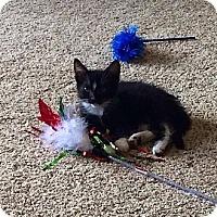 Adopt A Pet :: Mogi - Ogallala, NE