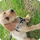 Adopt A Pet :: Dusty Springfield