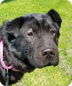 Dog Training Columbiana Ohio